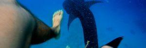 Whaleshark Almost Ate Me – Oslob Cebu – Philippines