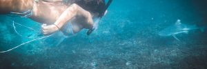 SNORKELING WITH SHARKS ON KOH TAO | THAILAND